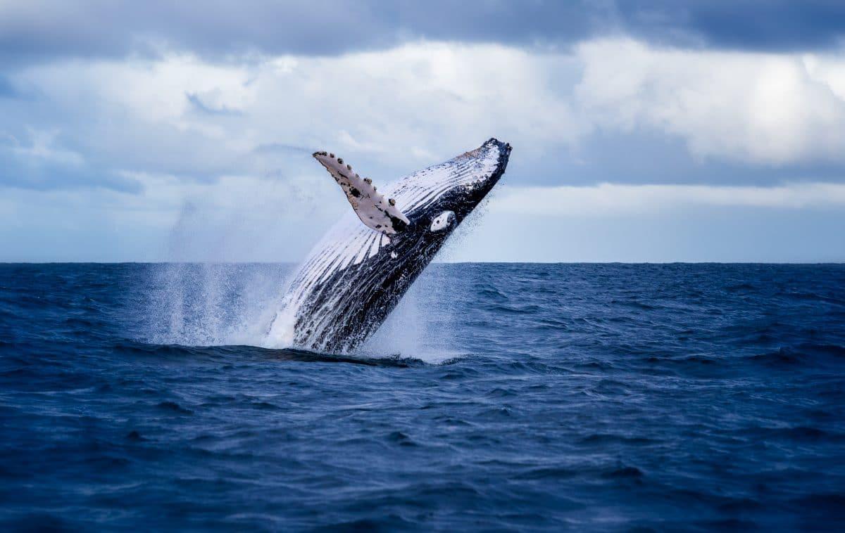 Seltener Anblick: Video zeigt Wale vor Küste Kroatiens