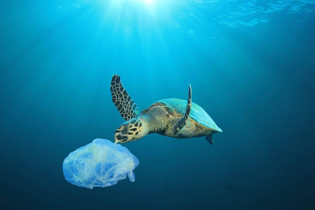 Weltmeere könnten sich bis 2050 komplett erholen