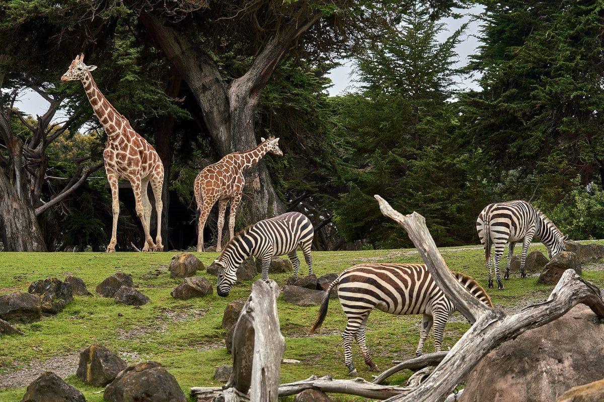 Corona-Krise: Deutscher Zoo plant Tiere untereinander zu verfüttern