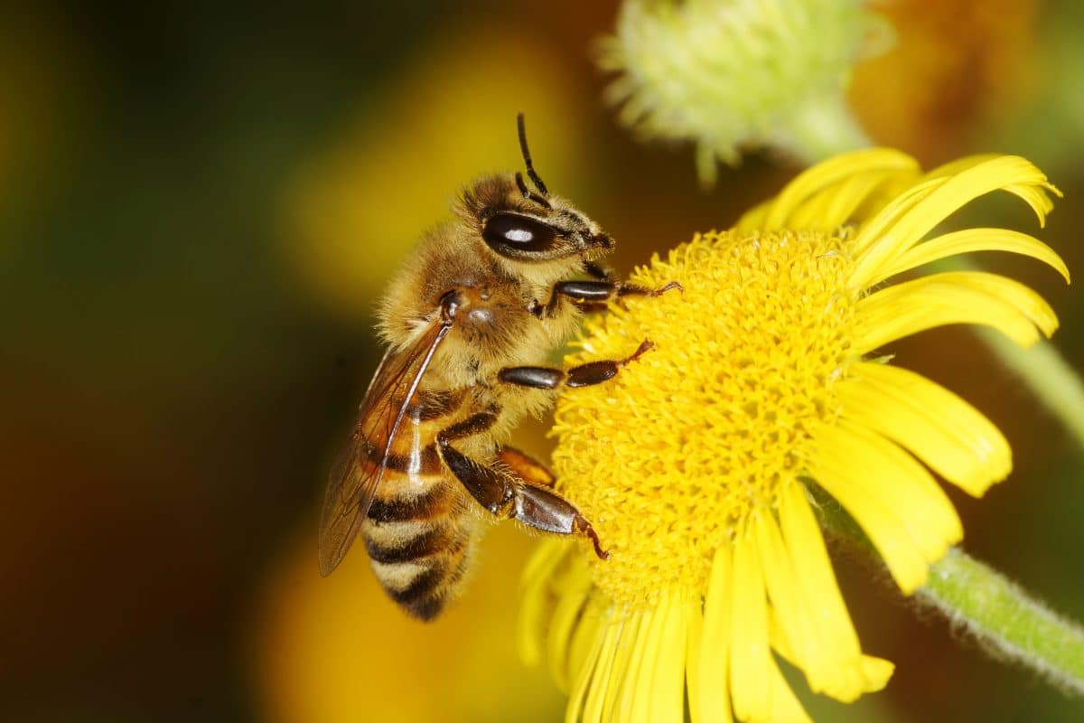 Weltbienentag: 6 spannende Fakten über Bienen