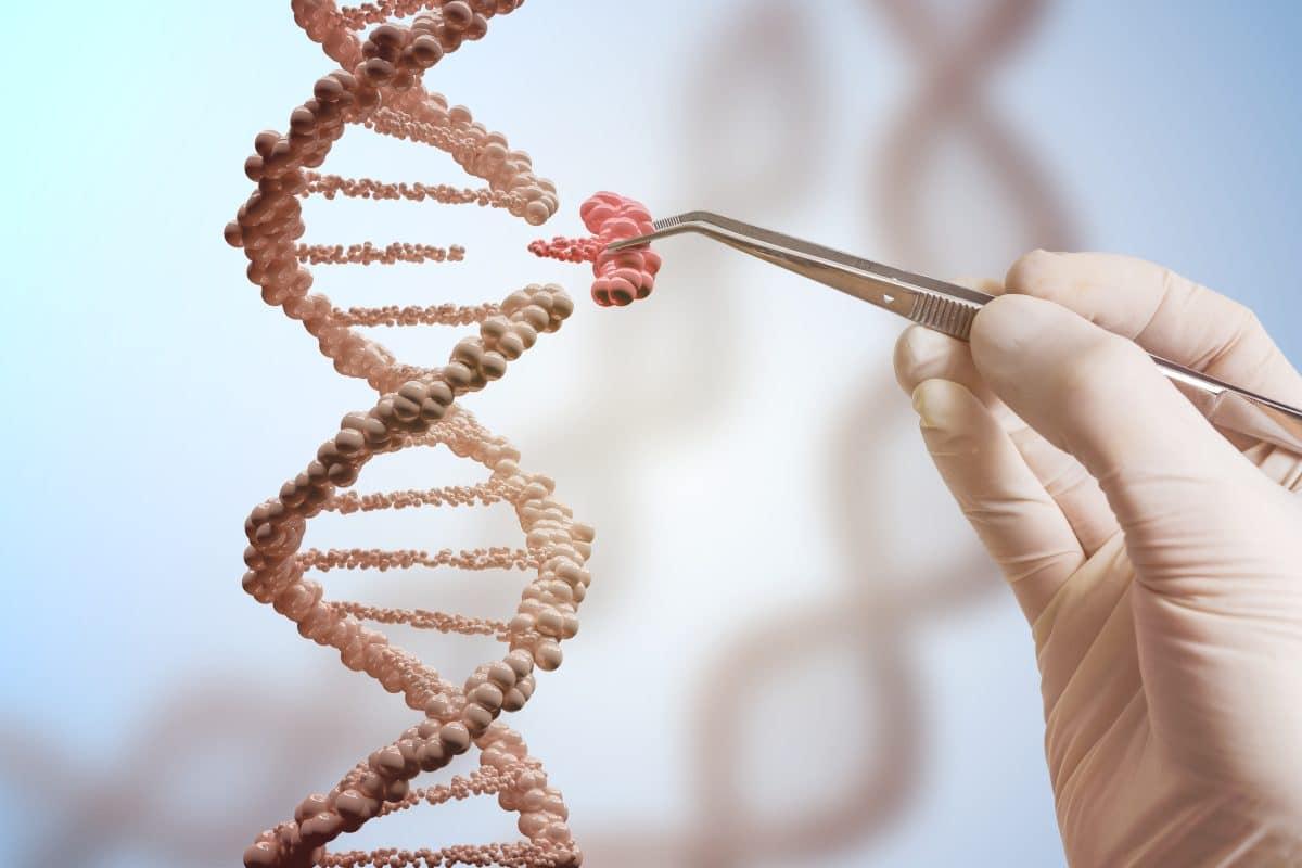 """Forscher entdecken """"Schlankmacher-Gen"""""""