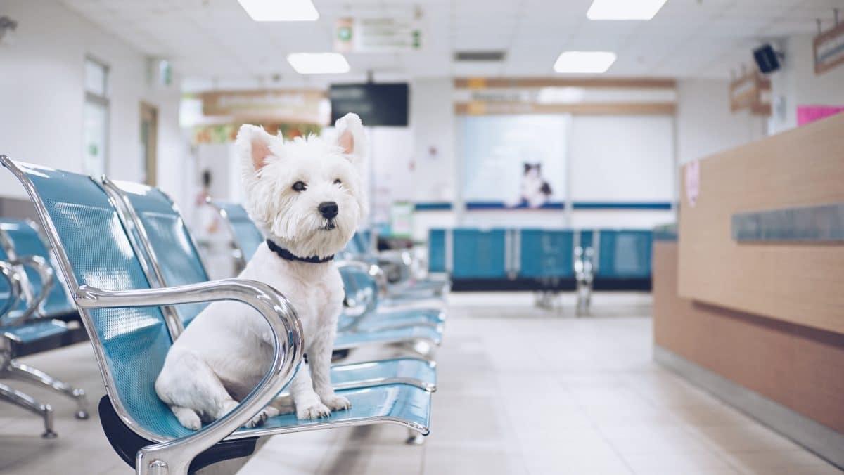 Hund wartet 3 Monate in Krankenhaus auf verstorbenen Besitzer