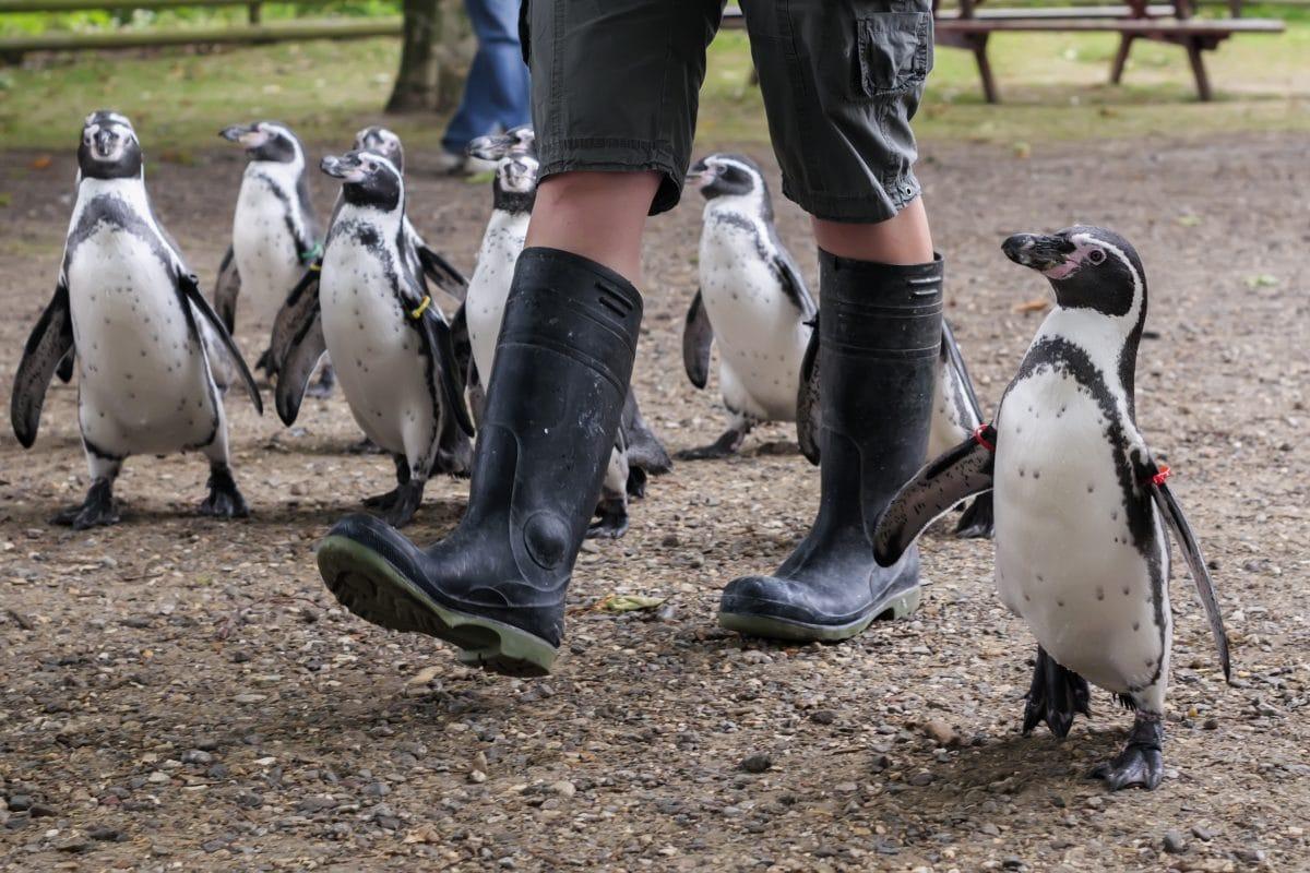 Pinguine bekommen Privatführung durch Kunstmuseum