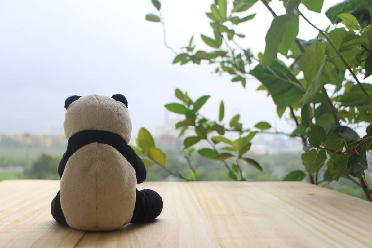 Restaurant in Thailand setzt Plüsch-Pandas an Tische, um Menschen Gesellschaft zu leisten