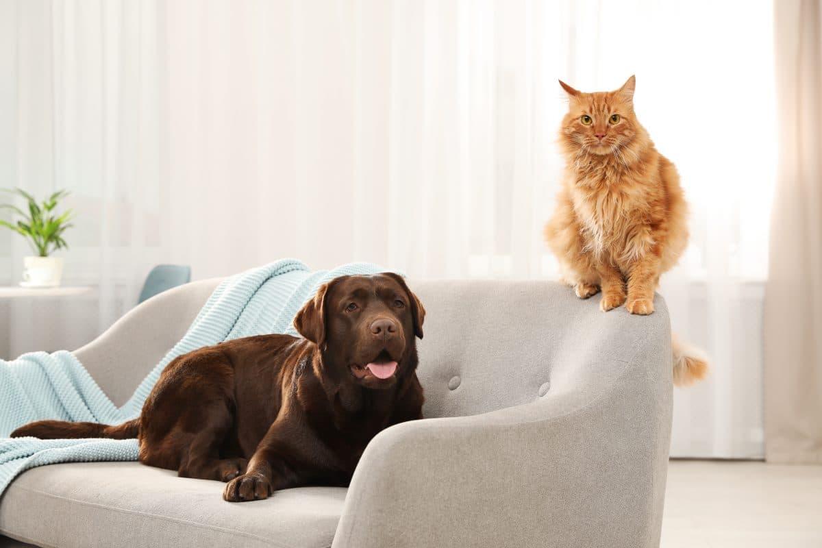 Social Distancing laut US-Behörde auch für Hunde und Katzen notwendig