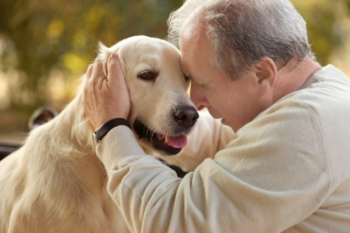 Beschlagnahmter Hund gegen Willen von Besitzer eingeschläfert