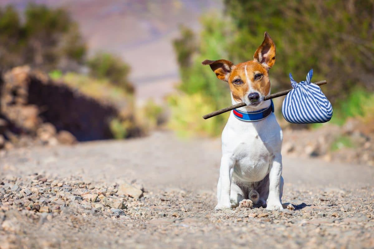 Schottland: Hund mit Koffer vor Bahnhof ausgesetzt
