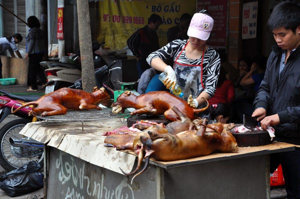 Hundefleisch-Festival in China eröffnet: Tierschützer schlagen Alarm