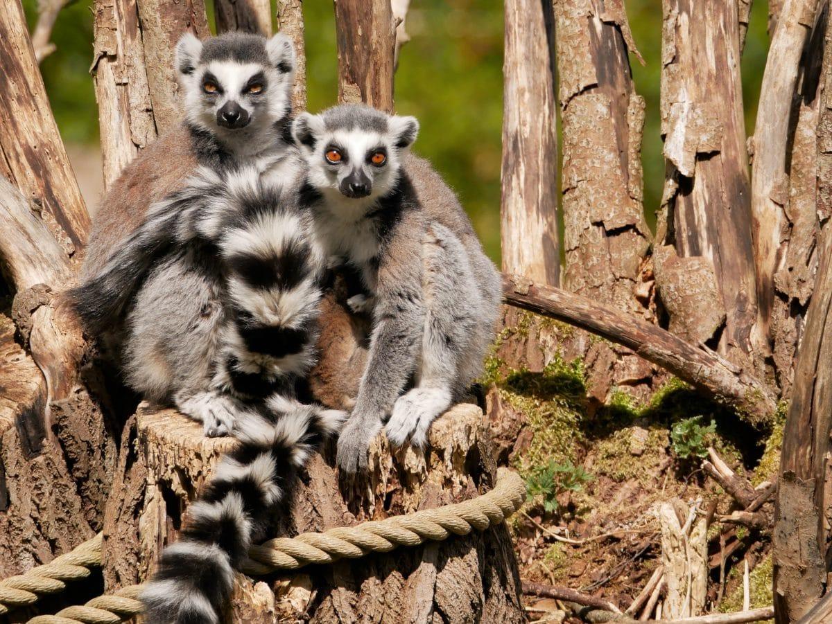 Zoo Salzburg: Katty-Babys tödlich verunglückt