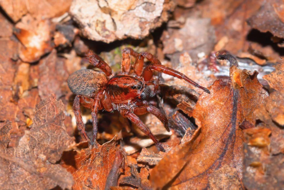 Babyboom bei Spinnen wegen Klimawandel