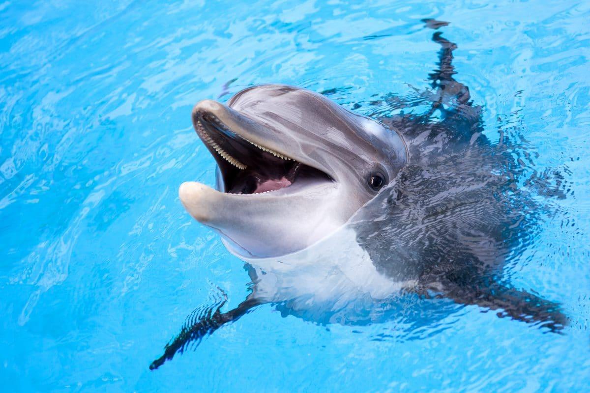 Delfin-Roboter sollen echte Tiere in Zoos ersetzen