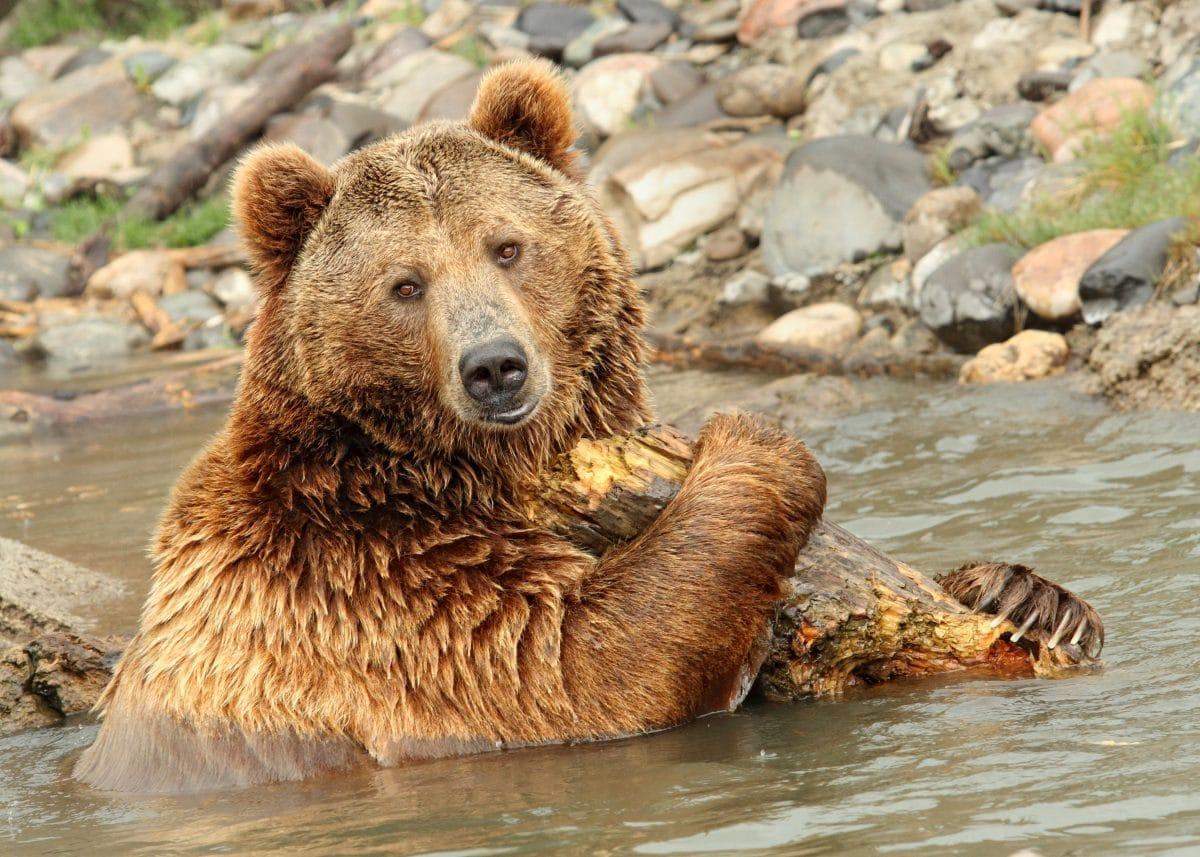 Yellowstone Nationalpark Tiere