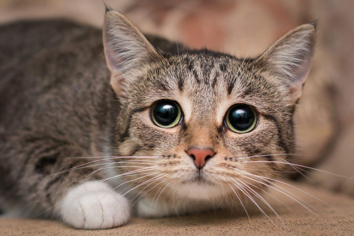 Katze gehäutet: Polizei sucht nach unbekannten Tierquälern