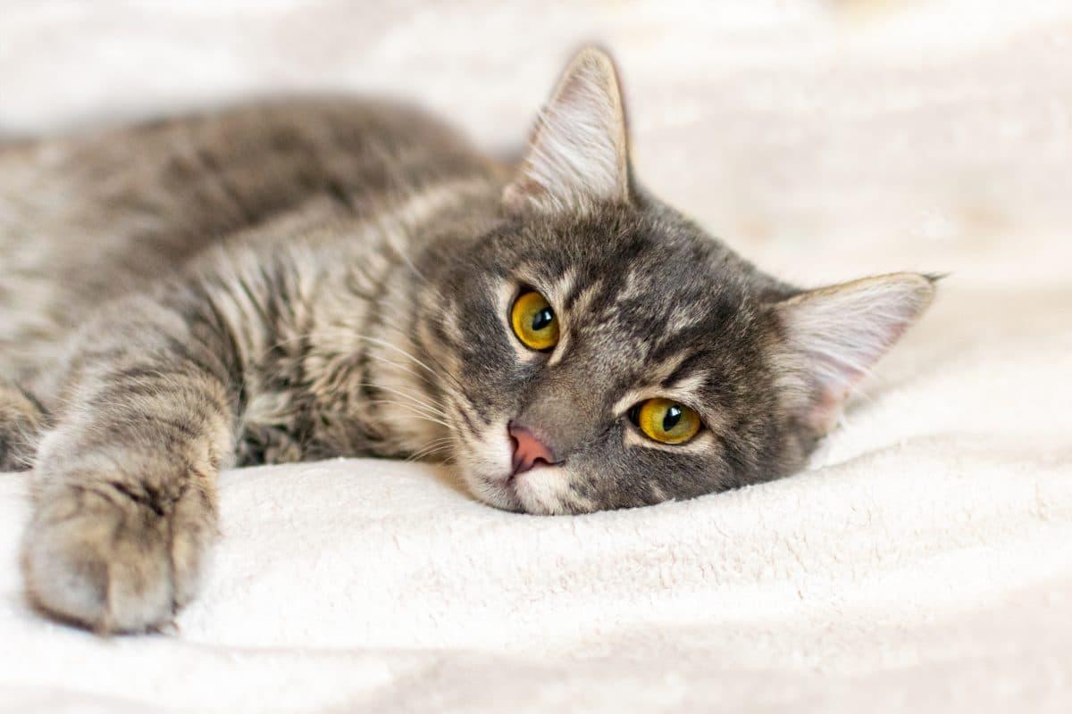 Tierquäler in Graz häuten erneut Katze: Polizei sucht nach Tätern