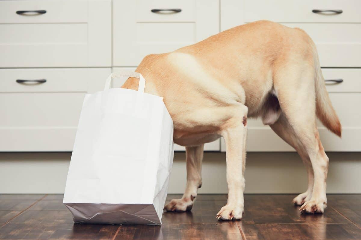 Hund bringt Einkäufe bis vor die Türe: Dieser Lieferservice begeistert das Netz