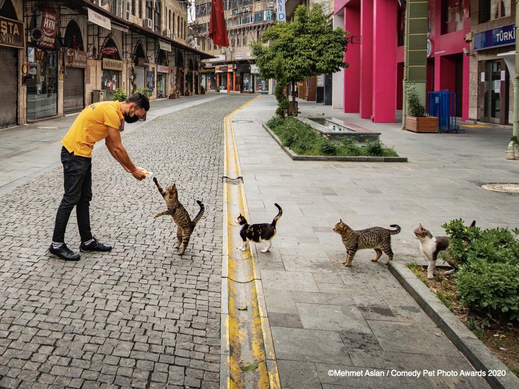 Bei diesem Wettbewerb kannst du deine lustigsten Haustierfotos einreichen