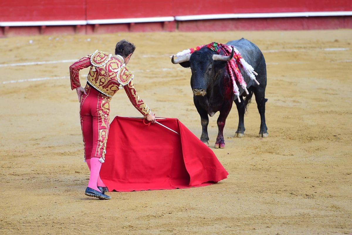 Stierkämpfe in Spanien nach Corona-Pause wieder erlaubt