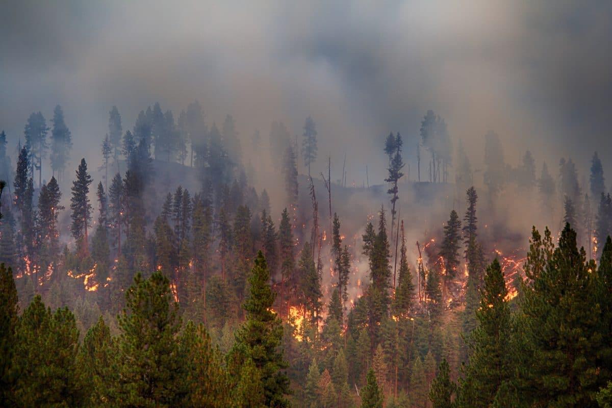 Portugal ruft wegen anhaltender Waldbrände Alarmzustand aus
