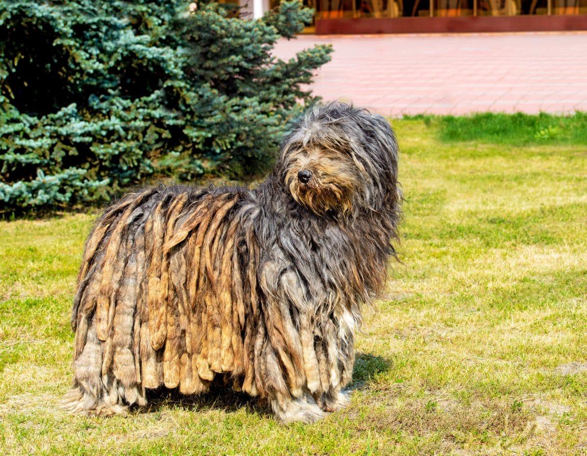 hunde die als welpen anders aussehen hirtenhund groß