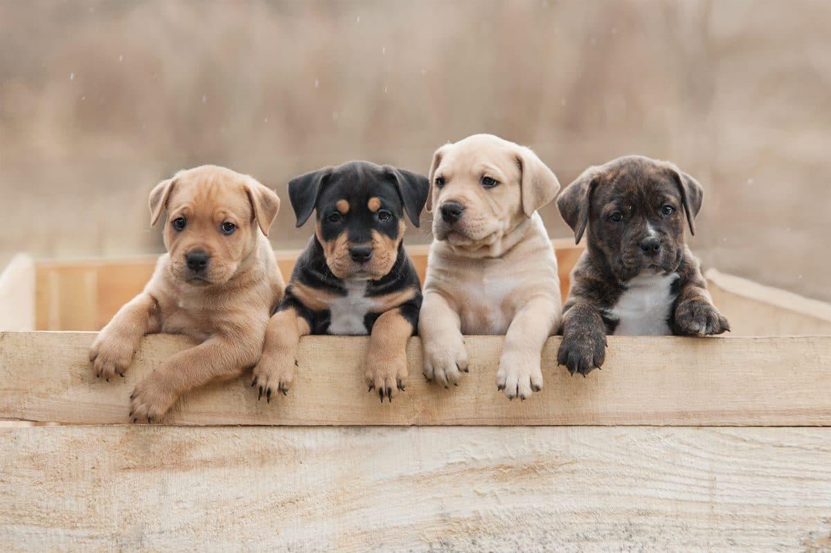 6 Hunde, die als Welpen ganz anders aussehen