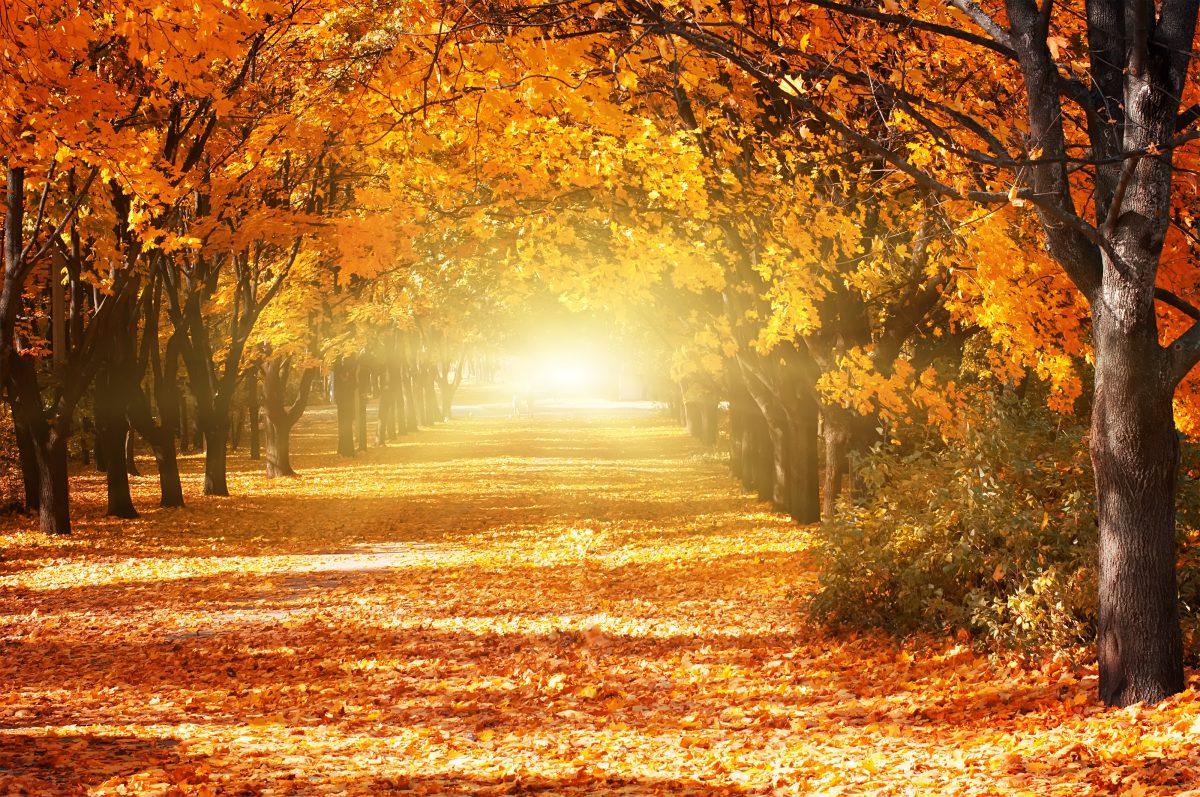 6 Tipps für den perfekten Kurz-Urlaub im Herbst