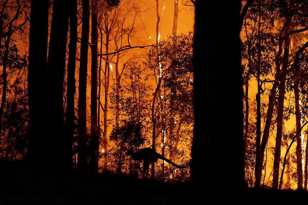 In Australien lodert das erste große Buschfeuer