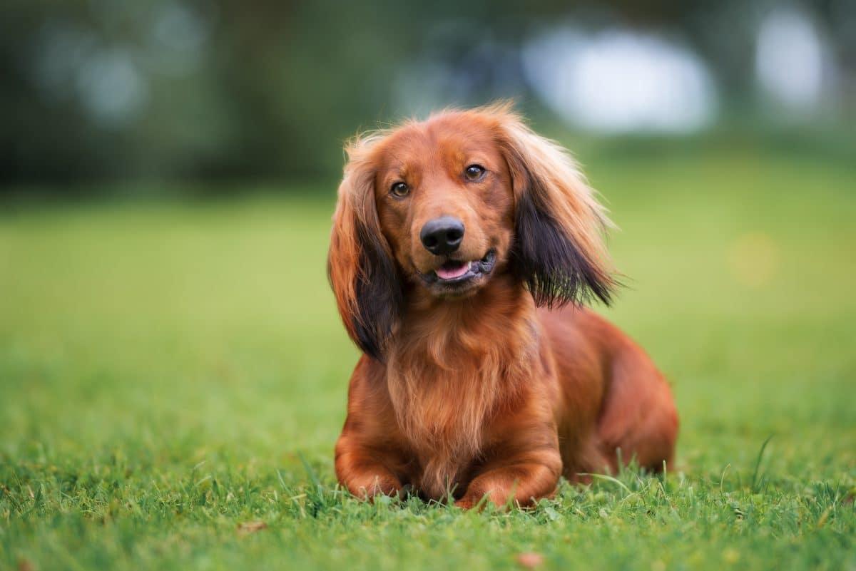 """Dieser Hund hört nur auf """"Harry Potter""""-Zaubersprüche"""