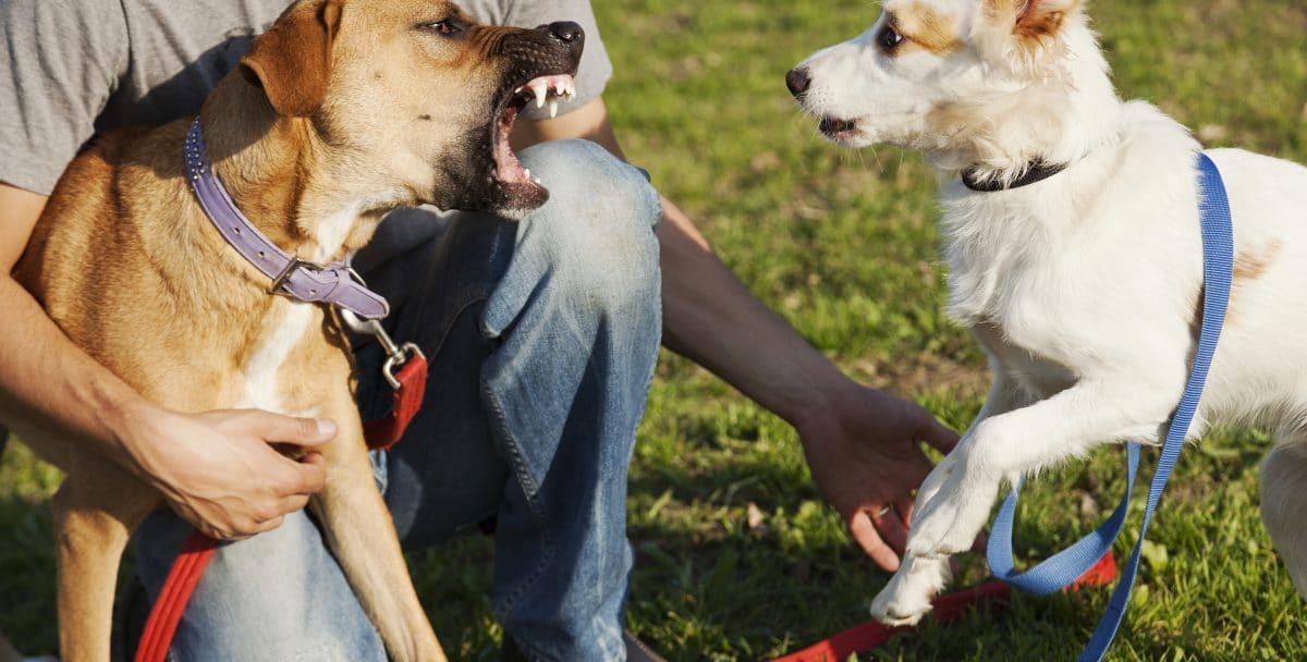 Mann sticht fremden Hund auf Hundewiese tot