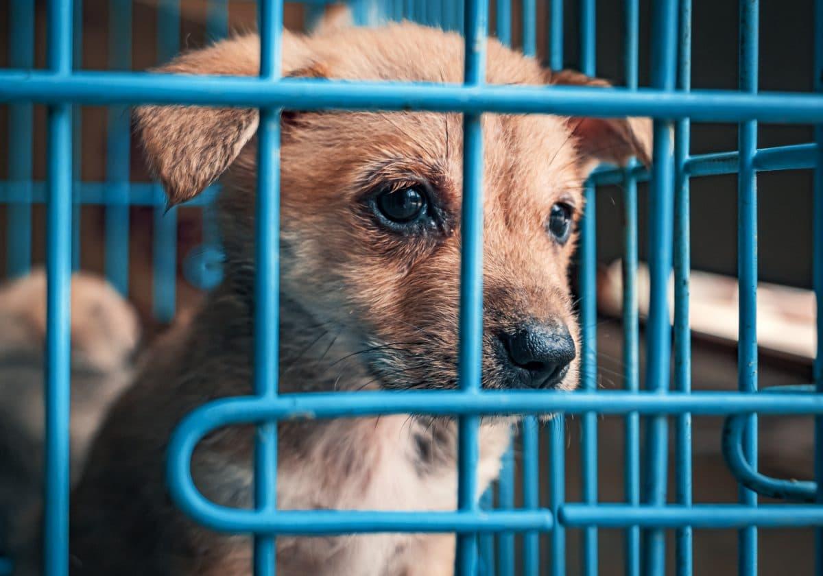 Transporter mit fast 100 Hundewelpen und Katzenbabys gestoppt