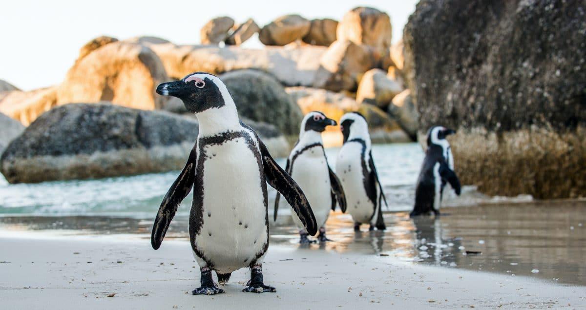 Pinguine im Live-TV erobern das Netz