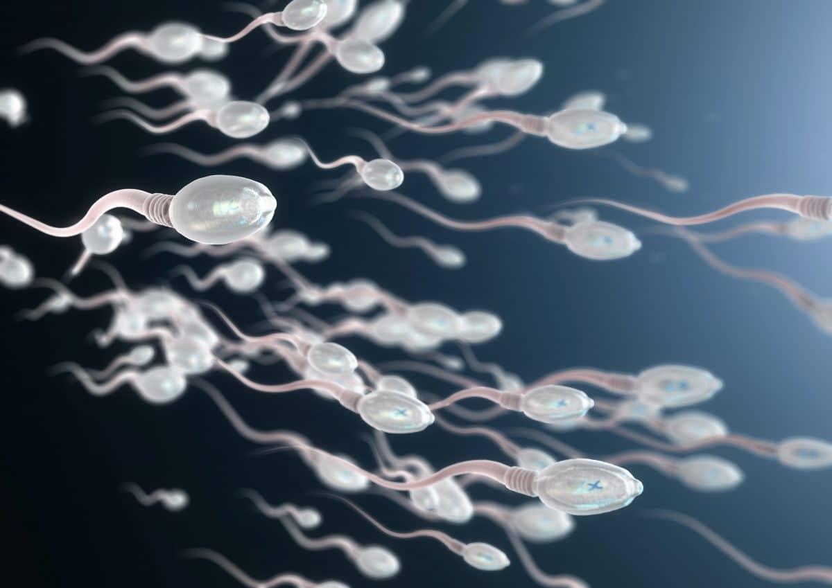 """Neue Entdeckung: Spermien """"schwimmen"""" nicht, sie kreisen"""