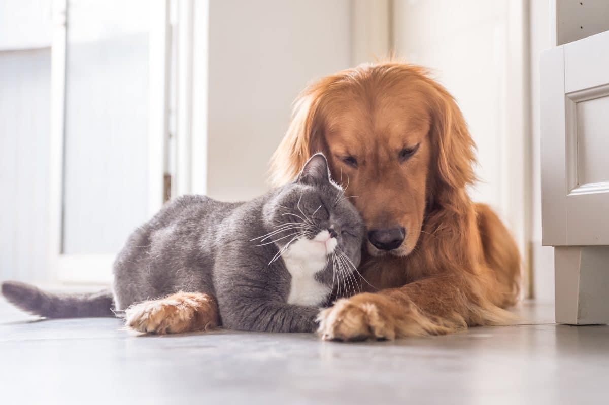 Studie: Menschen können Coronavirus auf Hunde und Katzen übertragen