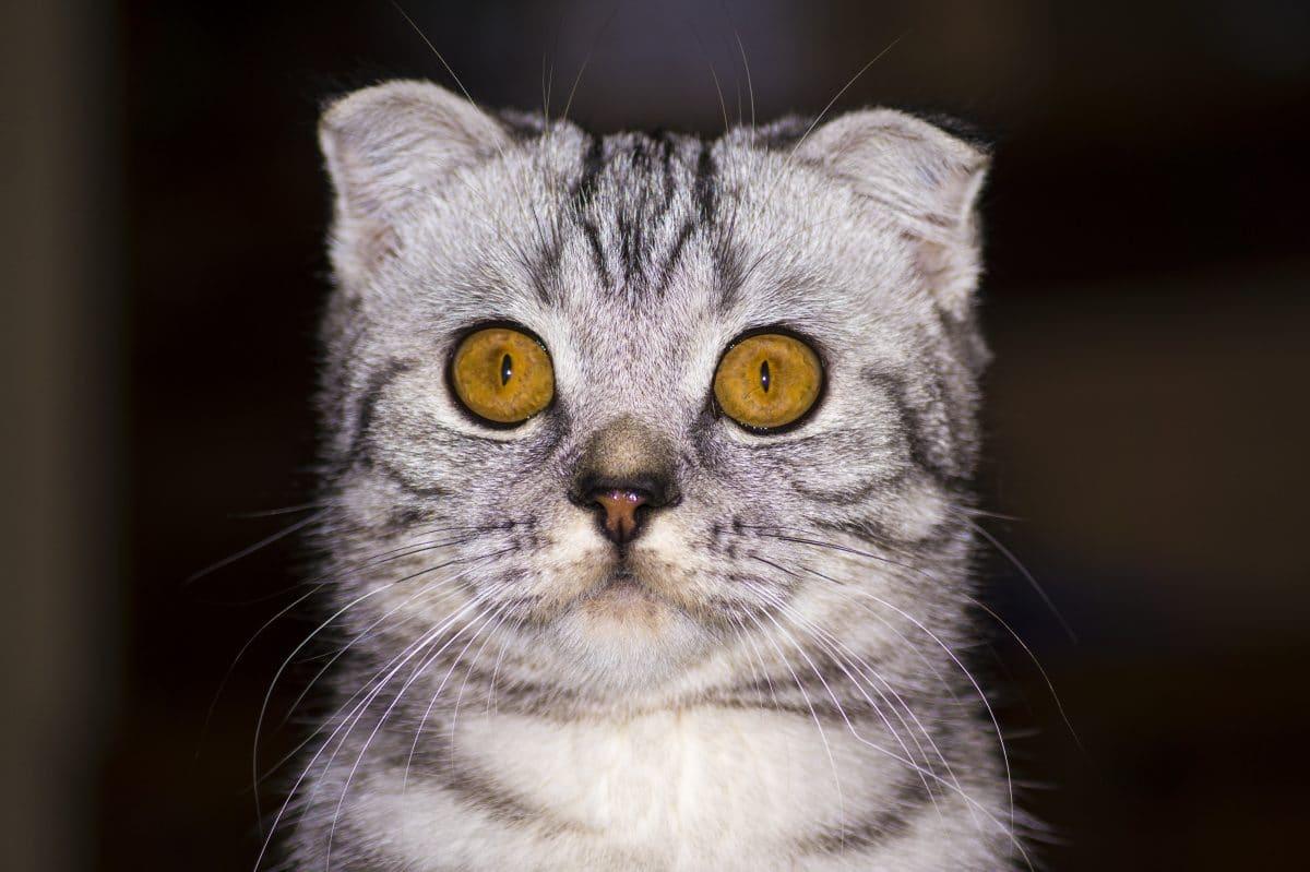 Tierquälerei: Teenager drücken das Auge einer Katze aus