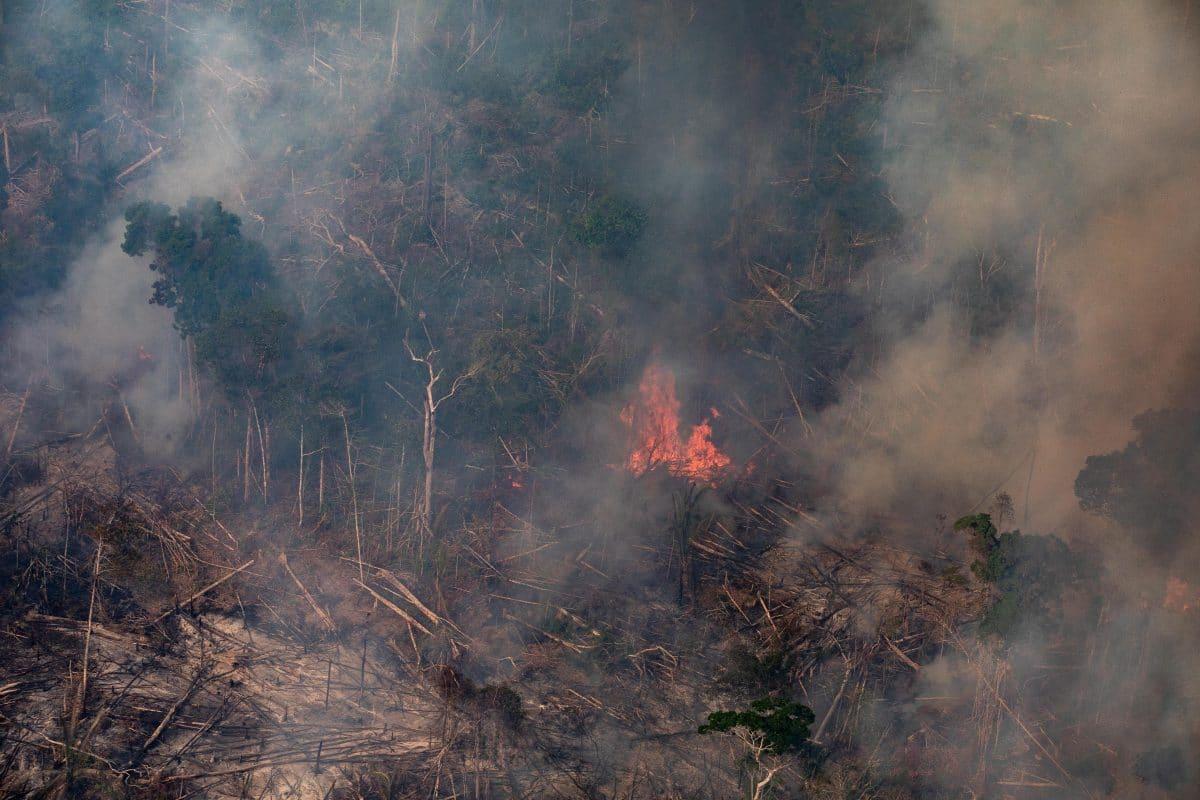 Amazonas: Höchste Anzahl an Bränden im August seit Beginn der Messungen