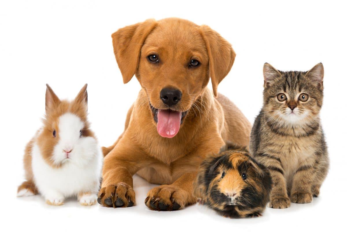 Diese Tiere verstehen uns besser als wir denken
