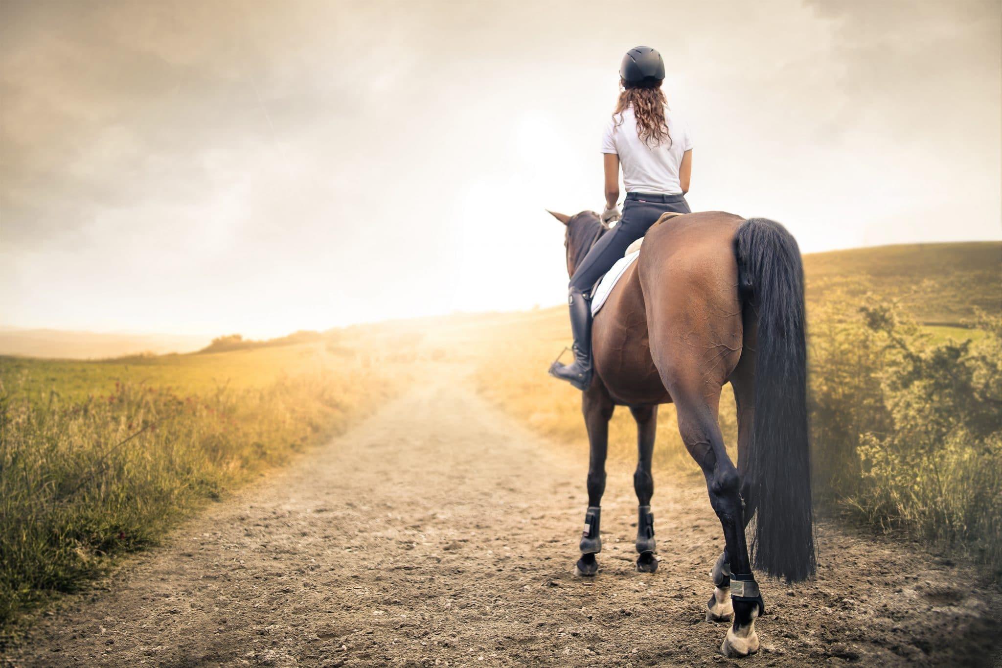 pferd rettet 16jährige vor angreifer
