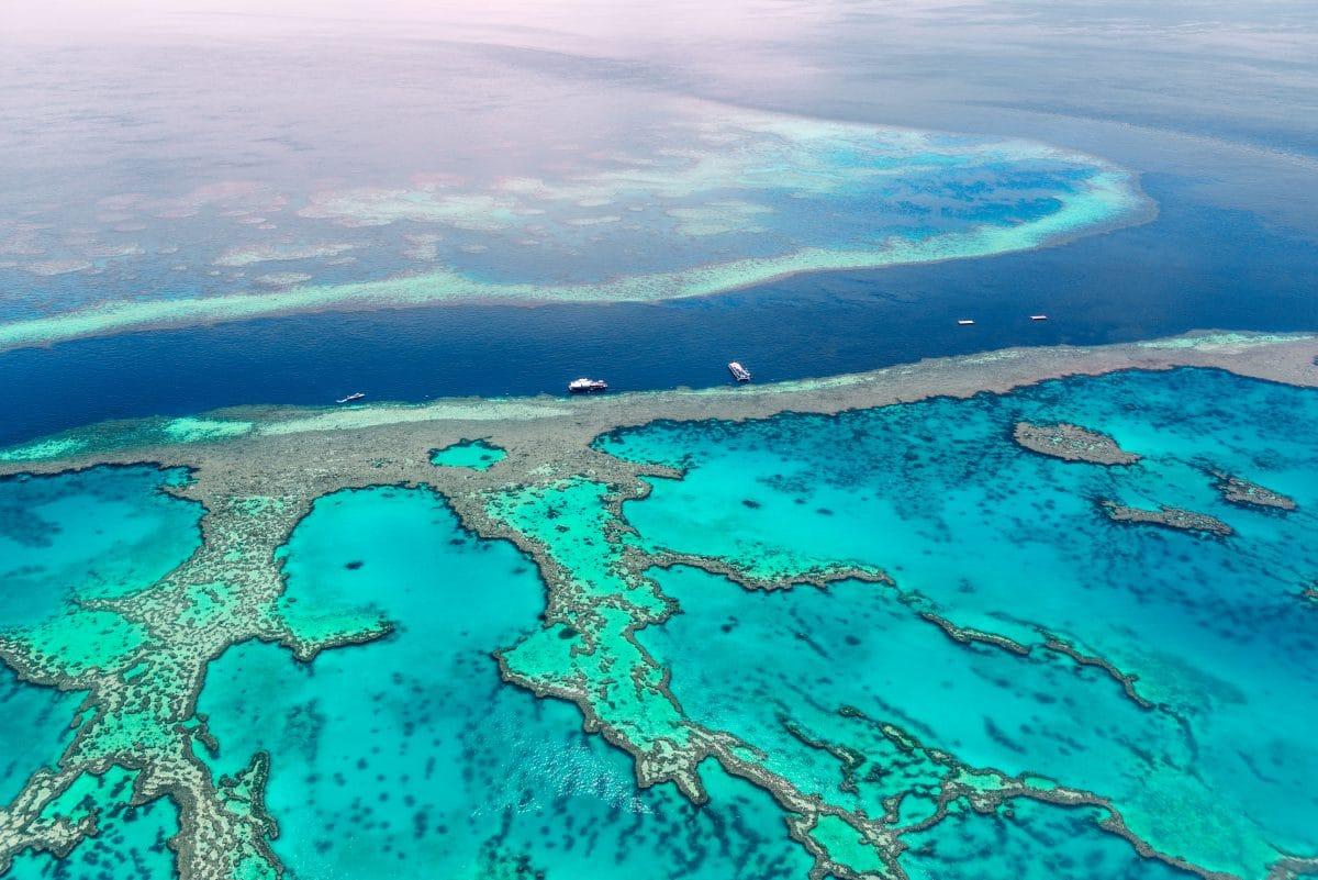 Bedrohtes Naturwunder: Great Barrier Reef verlor bereits die Hälfte seiner Korallen