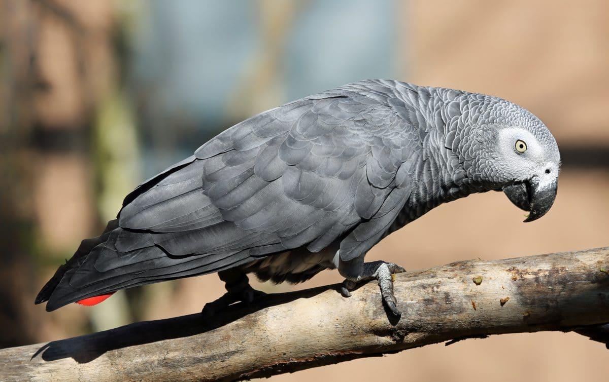 Papageien beschimpfen Wildpark-Besucher und müssen nun ihre Gruppe verlassen