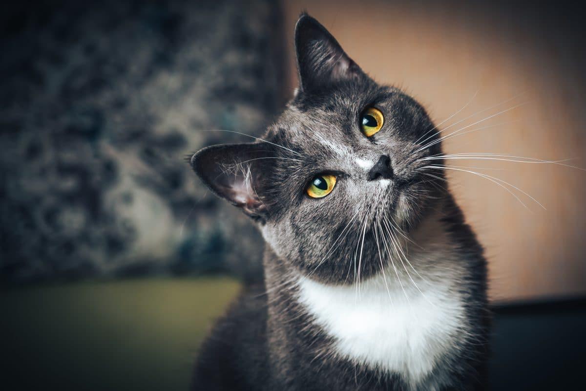 Deine Katze wird dich lieben, wenn du sie langsam anblinzelst