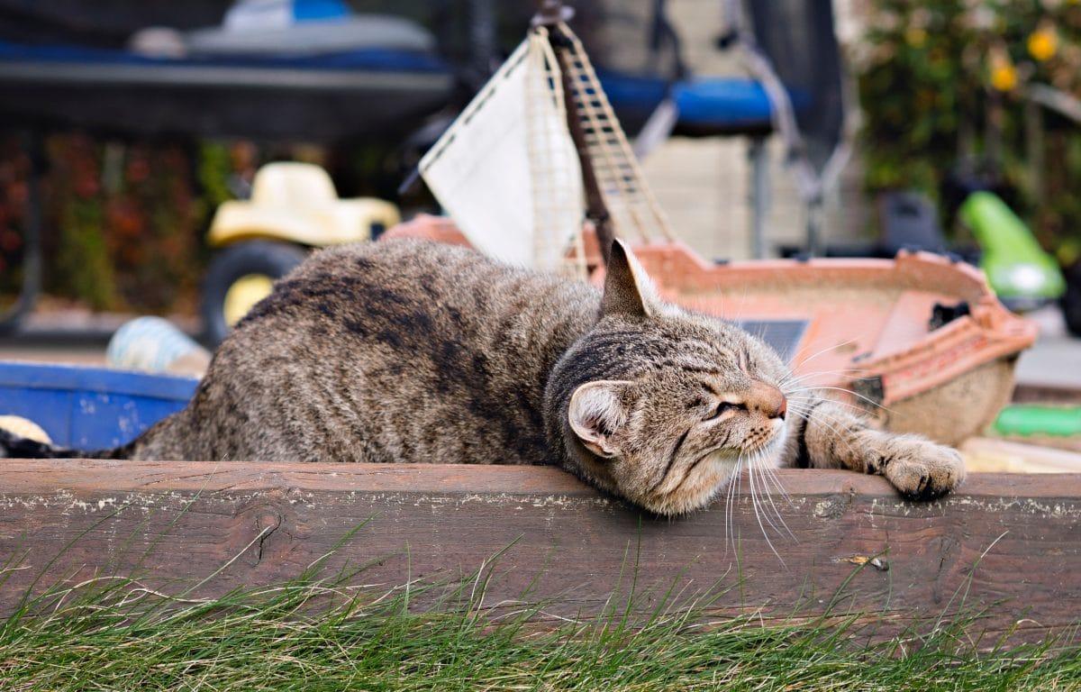 Katze gehäutet auf Spielplatz gefunden: Innereien lagen in Plastik daneben