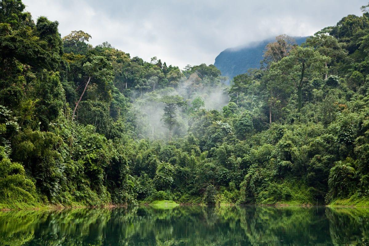 Neue Erfindung soll illegale Regenwald-Abholzung verhindern