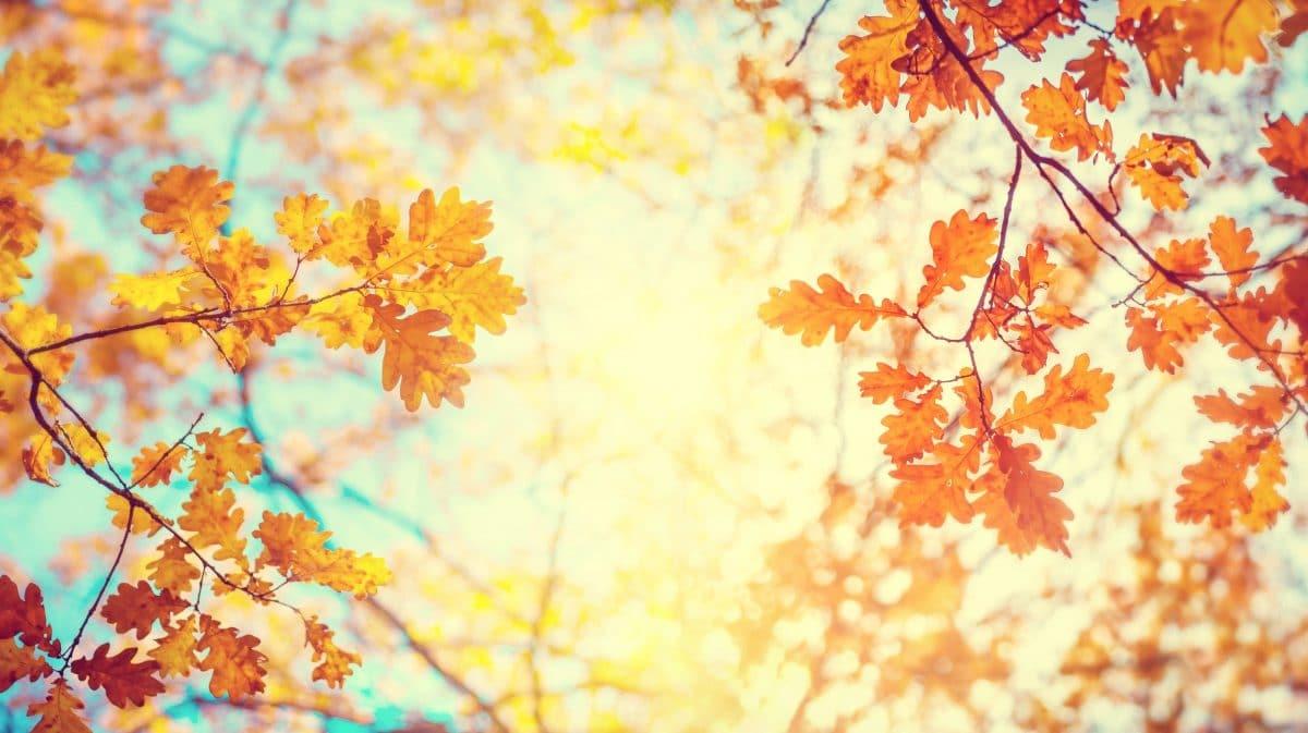 So wird der Herbst für dein Sternzeichen