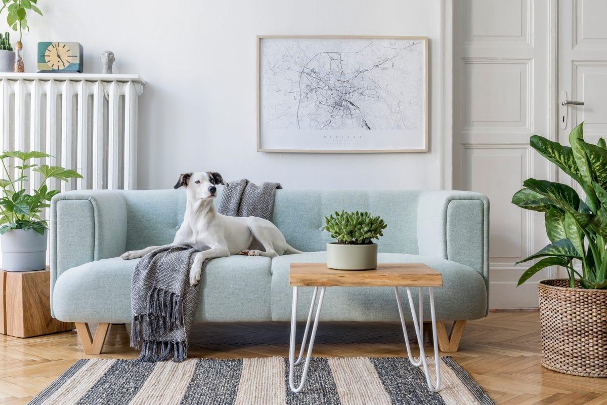 So bleibt deine Wohnung trotz Hund immer sauber