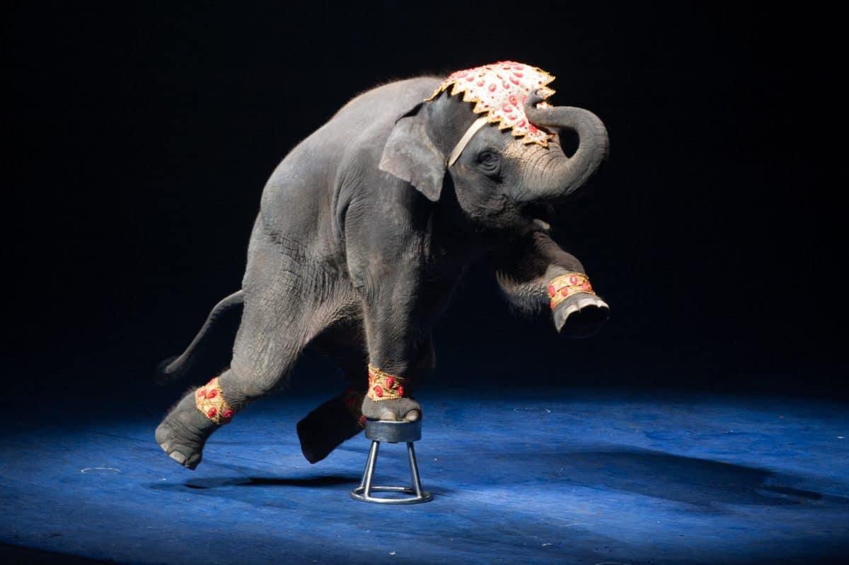Zirkusse in Frankreich dürfen keine wilden Tiere mehr halten