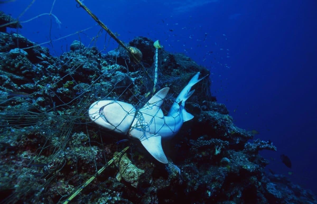 Todesfalle: Eine Million Tonnen Geisternetze landen jährlich im Meer