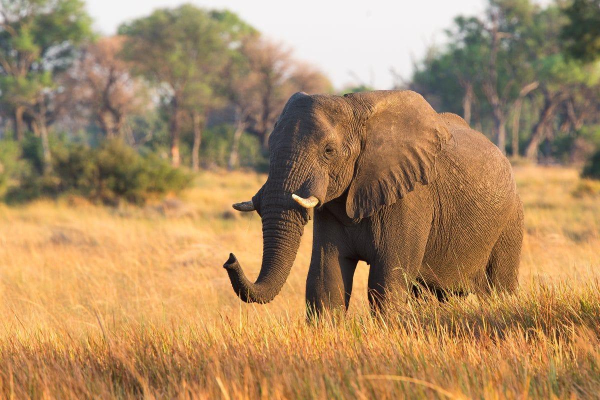 Einsamster Elefant der Welt nach 35 Jahren endlich in Freiheit
