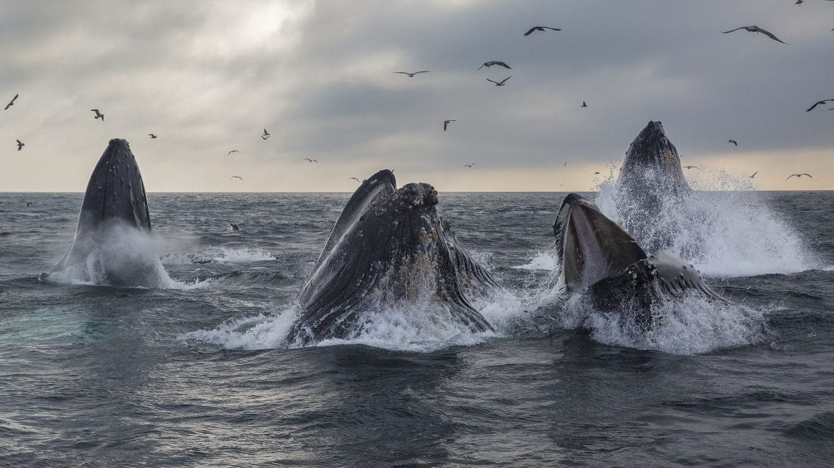 Sri Lanka: 120 gestrandete Wale von Helfern gerettet