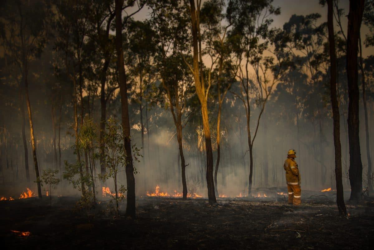 Nach Rekord-Hitze: Über 50 Waldbrände toben in Australien