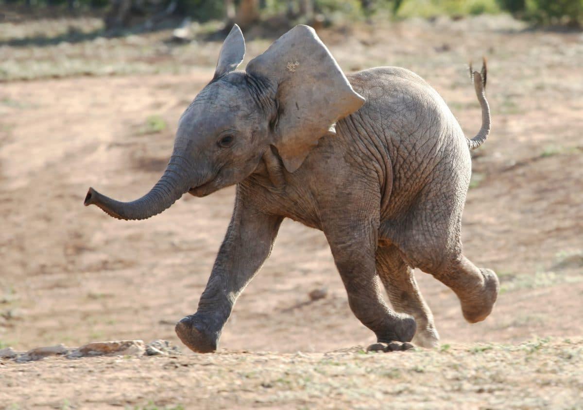 """""""Babyelefant"""" ist Wort des Jahres in Österreich"""