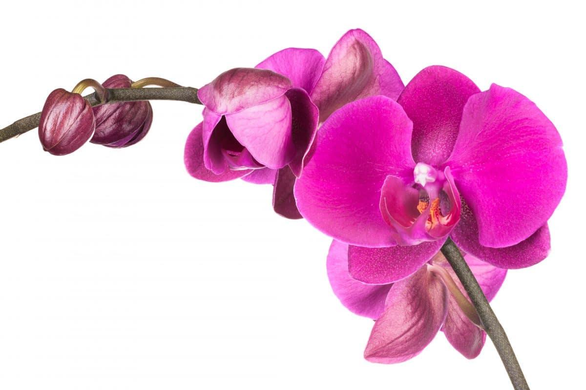Das ist die hässlichste Orchidee der Welt